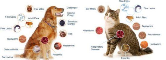 Animal_Hospital_st-Maarten_pet_parasite_prevention